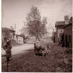 Photos Florentin 029